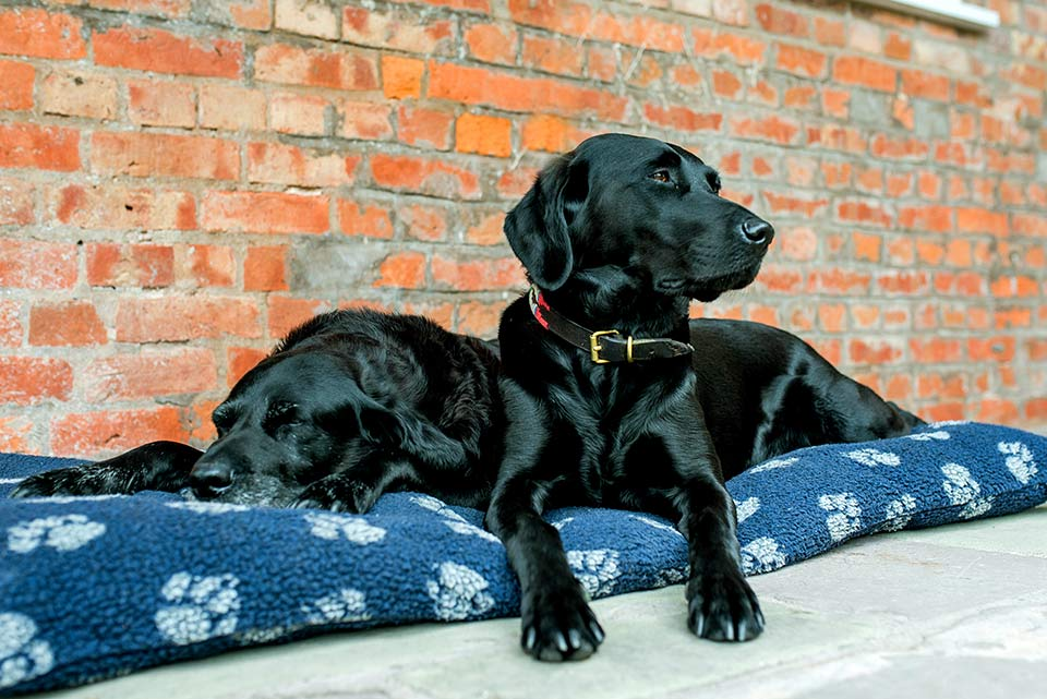We welcome well behaved dogs by prior arrangement