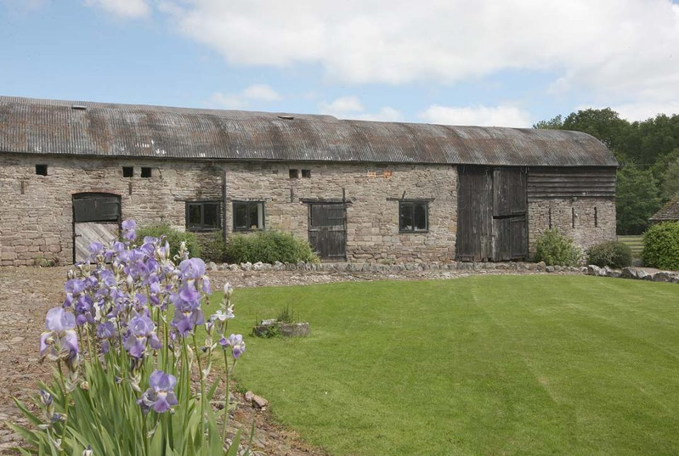 Irises blooming in front of the outbuildings where the games room and table tennis room are
